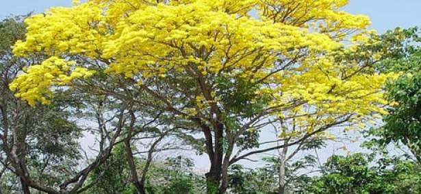 Se viene la semana del rbol for Arboles perennes en argentina